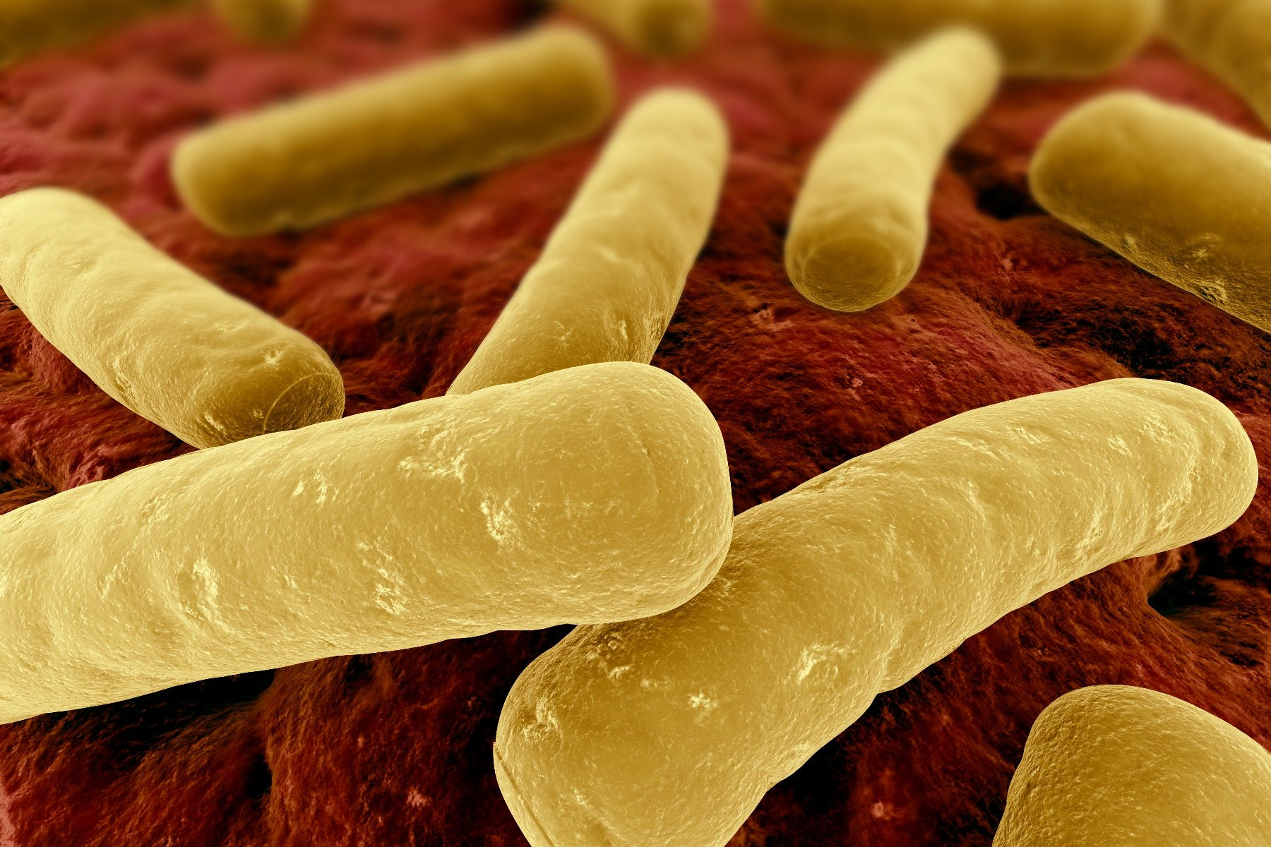 Clostridium difficile control and disinfection